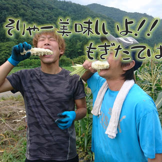 訳あり)果汁を楽しむホワイトコーン!60サイズ 8〜10本 2キロ未満 野菜/とうもろこし通販