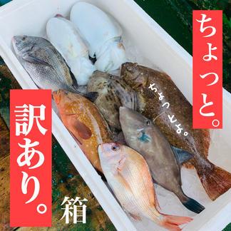 ちょっと。【訳あり】 瀬戸内鮮魚  詰め合わせ  お試し  フードロス お中元 今治  愛媛 入るほど 魚介類/セット・詰め合わせ通販