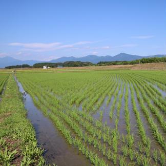 <値引き中>令和2年【オーダー後に精米】熊本県産 球磨川流域の米(ヒノヒカリ)白米5kg 5kg 米/米通販