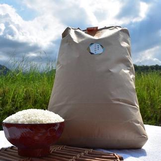 瀬戸内讃岐 令和2年産コシヒカリ100% クリーン精米10キロ 紙袋入り クリーン精米10Kg 米/米通販