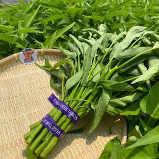 ワカイファーミーの空芯菜 1キロ(5袋分) 野菜/その他野菜通販