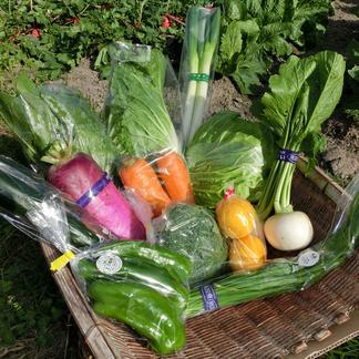 とっとり・だいせん 新鮮野菜直送便(おまかせセット) 10~13品目 野菜/セット・詰め合わせ通販