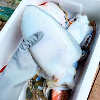 ✨お試しサイズ  瀬戸内鮮魚   詰め合わせ  初めての方限定 BBQ  お中元✨ 1.5キロ〜 魚介類/セット・詰め合わせ通販