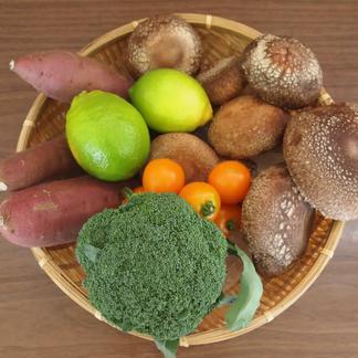 とれたて新鮮!野菜BOX オリジナル!とっちー段ボールに入れてお届け! お試しセット 3kgぐらい 野菜/セット・詰め合わせ通販