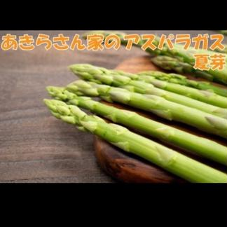 【朝採り、お中元にもどうぞ】あきらさん家のアスパラガス 夏芽1.2kg      秀品1.2kg サイズL以上 野菜/アスパラガス通販