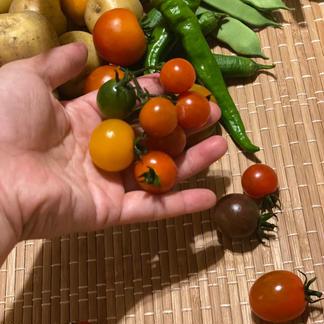 五味農園のお野菜箱 1.5kg程度 野菜/セット・詰め合わせ通販