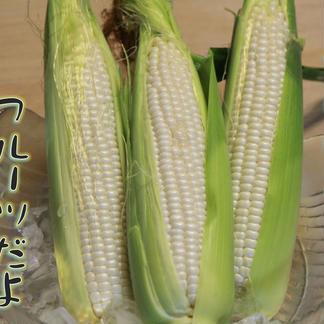 訳あり 果汁を楽しむホワイトコーン 4.0キロ 15〜20本 4キロ未満 野菜/とうもろこし通販