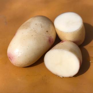農薬・化学肥料不使用のジャガイモ食べ比べセット♪ 2kg 野菜/じゃがいも通販