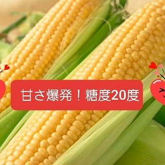 【8月10日から発送】奇跡のとうきび8本 3.5kg 野菜/とうもろこし通販