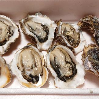 父の日!永幸丸の超新鮮岩牡蠣!特大サイズ500g超え!3kg分 3kg 魚介類/牡蠣通販
