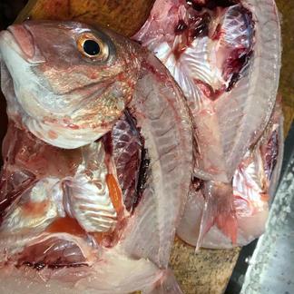(夏ギフト)旬魚!!新鮮な季節魚を干物にしました 干物3~4枚 魚介類/その他魚介通販