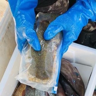 ✨期間限定  瀬戸内  ナマコのみ詰め合わせ✨ 3キロ〜 魚介類/セット・詰め合わせ通販