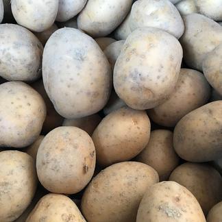 【農薬・除草剤不使用】じゃがいも(ニシユタカ) 3㎏ 3kg 野菜/じゃがいも通販