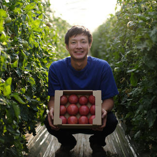 情熱トマト(約2kg) 約2kg 野菜/トマト通販