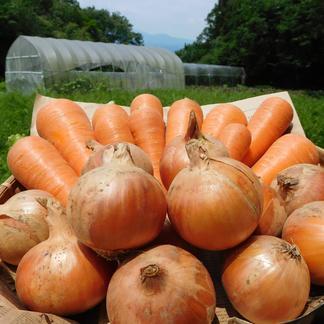 【定番野菜】人参4kgと玉ねぎ4kgのセット(規格外品も含む無選別品・栽培期間中農薬、化学肥料不使用) 人参4kg・玉ねぎ4kg 野菜/セット・詰め合わせ通販