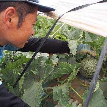 向後農園 旭市 果物/メロン通販