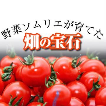 畑の宝石 玉名市 野菜/トマト通販