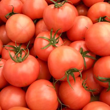 くるるんトマトファーム龍農園 大木町 野菜/トマト通販