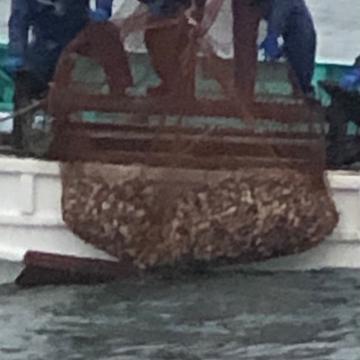 椎名丸漁業 匝瑳市 魚介類/蛤通販