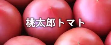 桃太郎トマト.png