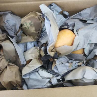 房州産枇杷   規格が小さい階級 30粒位入り階級Mサイズ 果物(びわ) 通販