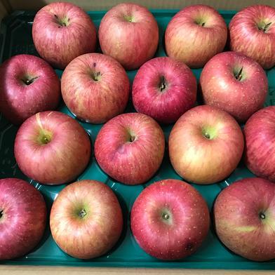 【数量限定わけあり品】青森県産りんご「サンふじ」 色薄・キズ・変形あり 5kg  5kg ケイエス青果