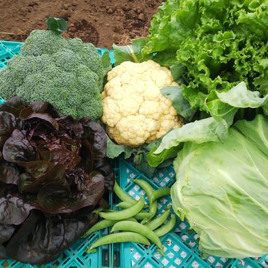 旬の新鮮春野菜セットA   (5~6種類) 3kg~5kg 果物や野菜などのお取り寄せ宅配食材通販産地直送アウル