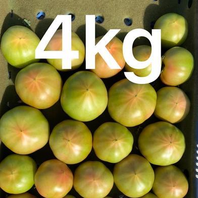 [お試し価格]採れたて訳ありトマト4キロ 箱込みで4キロ強5キロ以内です。 果物や野菜などのお取り寄せ宅配食材通販産地直送アウル