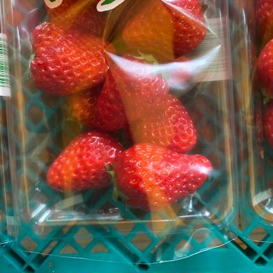 鈴木清友農園 いちご 紅ほっぺ 6パック 300g ×6パック 食材ジャンル: 果物 > いちご 通販
