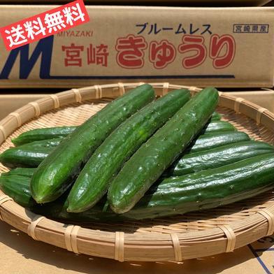 【たまの農園の自信作】新鮮きゅうり!※西日本向け発送 5kg箱(50本前後) 果物や野菜などのお取り寄せ宅配食材通販産地直送アウル