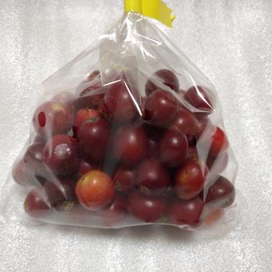 純 国産 高級コーヒーチェリー(コーヒー生豆)100g 100g 果物や野菜などのお取り寄せ宅配食材通販産地直送アウル