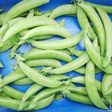 有機栽培🎵さやが大きく超甘~いスナップエンドウ🌱   おまけ野菜付き🎵 1kg 果物や野菜などのお取り寄せ宅配食材通販産地直送アウル