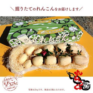 武井のれんこん 4kg (2kg+2kg) 4kg (2kg+2kg) 果物や野菜などのお取り寄せ宅配食材通販産地直送アウル