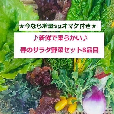 たてやまかおり菜園『春のサラダ野菜セットM8品目』 採れたて新鮮サラダ野菜が計8品目入っています キーワード: お試し 通販