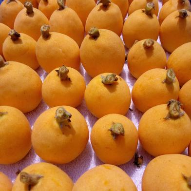 農薬化学肥料不使用びわ 500g以上(10〜12個) 果物(びわ) 通販