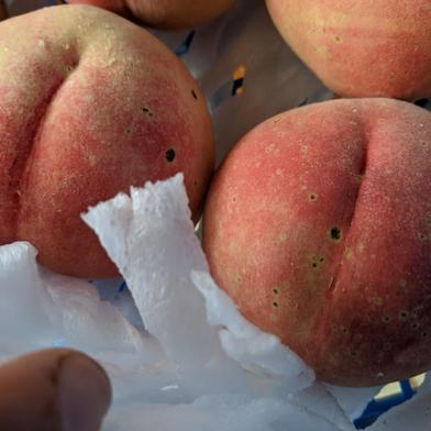 家庭用桃(あかつき)2kg【数量限定】農家から朝採り直送便 約2kg(6〜9玉入り) 果物や野菜などのお取り寄せ宅配食材通販産地直送アウル