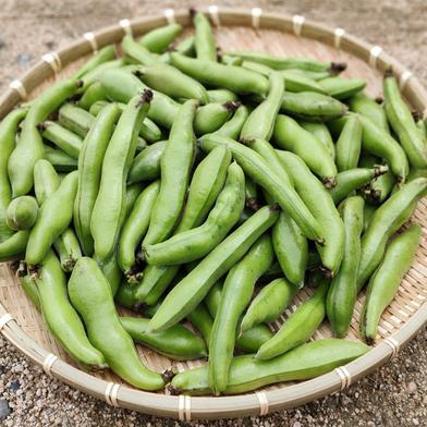 【常温便】ふぞろいのソラマメたち(無選別) 0.9kg×1袋=0.9kg 果物や野菜などのお取り寄せ宅配食材通販産地直送アウル