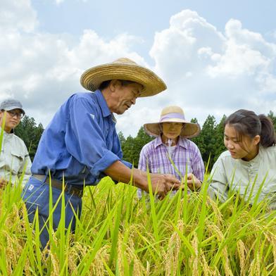 滝本米 プレミアム 玄米 5kg 農薬不使用 玄米 化学肥料不使用 特別栽培米 プレミアム 玄米 5kg 果物や野菜などのお取り寄せ宅配食材通販産地直送アウル