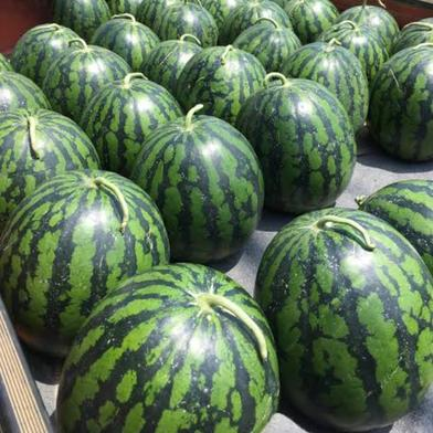 三浦の西瓜 すいか1玉、南瓜1玉 果物や野菜などのお取り寄せ宅配食材通販産地直送アウル