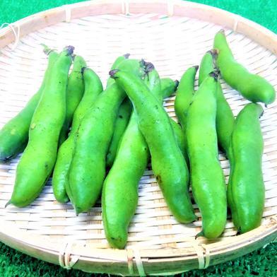 莢込みそら豆約3㎏セット 莢込みそら豆約3㎏セット 果物や野菜などのお取り寄せ宅配食材通販産地直送アウル