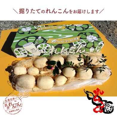 武井のれんこん 3kg 3kg 果物や野菜などのお取り寄せ宅配食材通販産地直送アウル