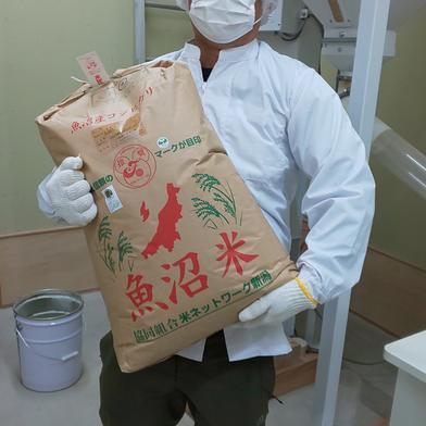 魚沼産コシヒカリ 30kg袋 果物や野菜などのお取り寄せ宅配食材通販産地直送アウル