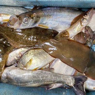 朝取れ鮮魚BOX 約5キロ 果物や野菜などのお取り寄せ宅配食材通販産地直送アウル