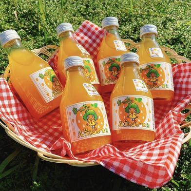 まーくん家のはっさくジュース 180ml 5本 180ml 5本 果物や野菜などのお取り寄せ宅配食材通販産地直送アウル