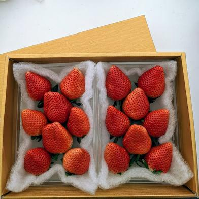 ✢ゴールドのギフトボックス✢ 群馬県産『やよいひめ』 300g×2パック 食材ジャンル: 果物 > いちご 通販