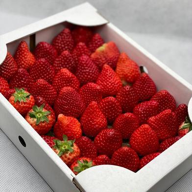 規格外いちごさん8kg 8kg 果物や野菜などのお取り寄せ宅配食材通販産地直送アウル