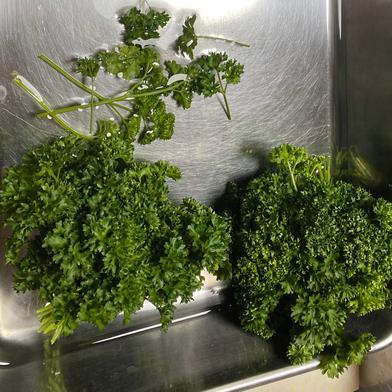 サンプル野菜 2kg はゆっちFarm