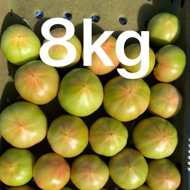 お得!まるまるトマト8キロ 箱込みで8キロ強9キロ以内です! 果物や野菜などのお取り寄せ宅配食材通販産地直送アウル