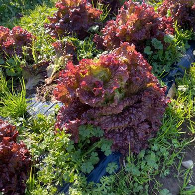 季節の お野菜セット 10kg以内 はゆっちFarm