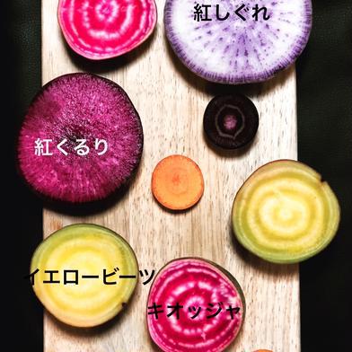 お試し/北海道産越冬(全て無農薬)野菜詰め合わせ 6kg程度 キーワード: お試し 通販